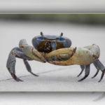 Crabs Chitosan