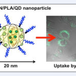 Japan Nanoparticles